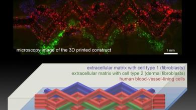 Photo of Harvard fa scorrere il sangue negli organi bio-stampati in 3D