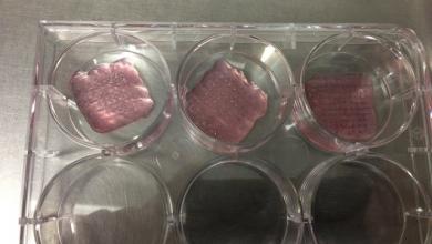 Photo of Scienziati trovano la miscela ideale per la biostampare la cartilagine