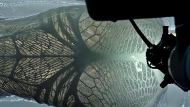 """Photo of Il nuovo """"Alien: Covenant"""" sarà all'altezza di quanto presentato nel teaser?"""