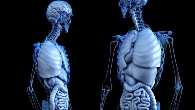 Photo of WFIRM sviluppa un mini modello con organi 3D del corpo umano