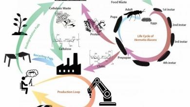 Photo of SUTD punta sull'economia circolare localizzata per i materiali ecologici di stampa 3D
